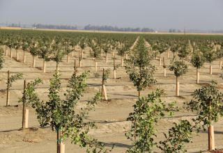 https://pacificnutproducer.com/2019/03/25/record-high-pistachio-acreage-planted-in-2018/