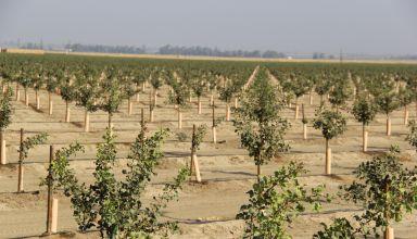 https://pacificnutproducer.com/2019/03/25/record-high-pistachio-acreage-planted-in-2018/