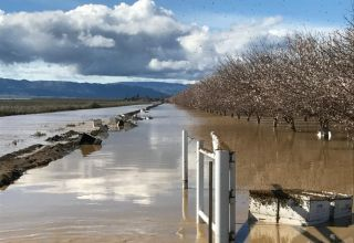 flooded orchard
