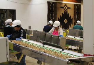 Almonds on conveyer