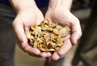 Almond Board of CA Explores Options for Exporting Almond Biomass