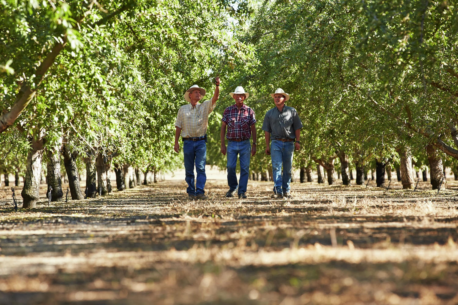 NASS Predicts Another Record-Breaking Almond Crop