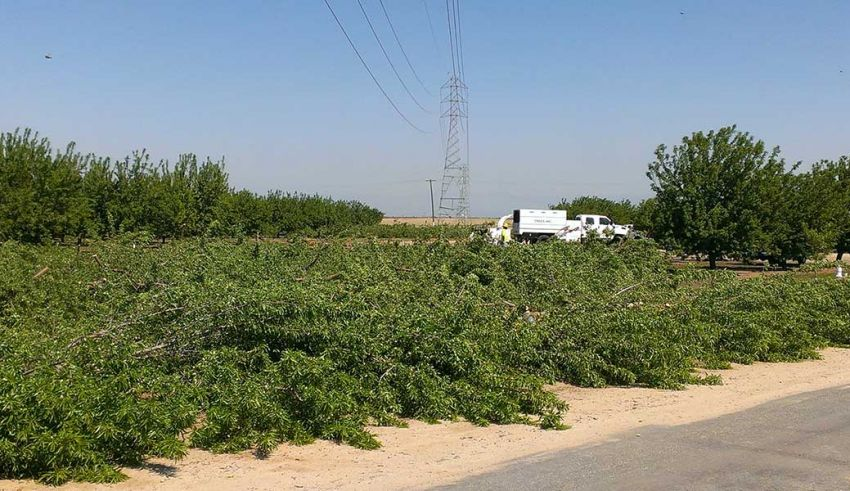A Proactive Approach to Orchard Planting